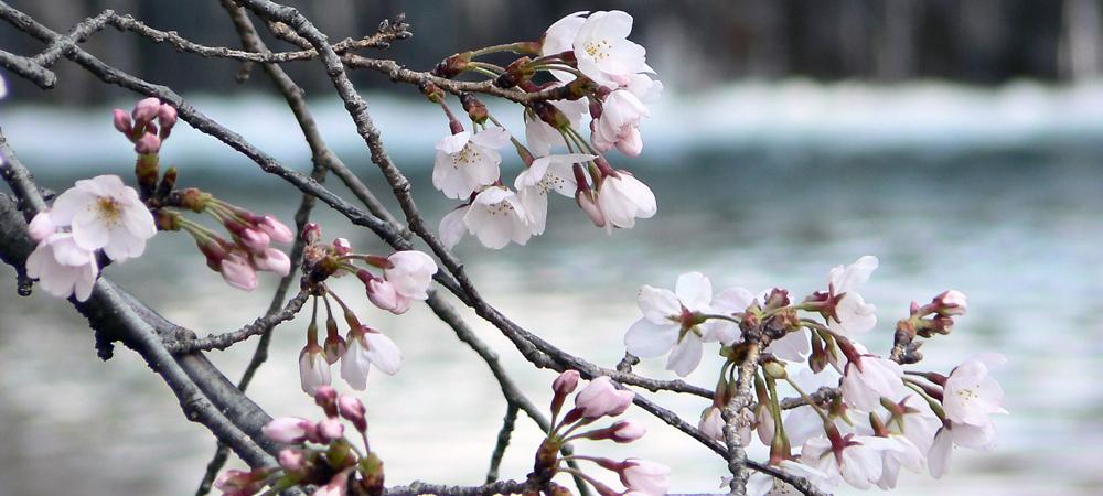 韓国語の翻訳・通訳 / 日本語教育セミナー、韓国語セミナーをご希望の方へ